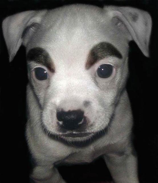 funky_makeup_dog.jpg
