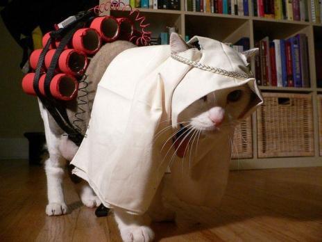 muslim-cat.jpg