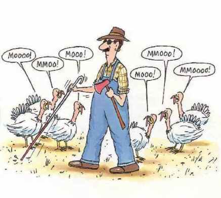 turkey11.jpg